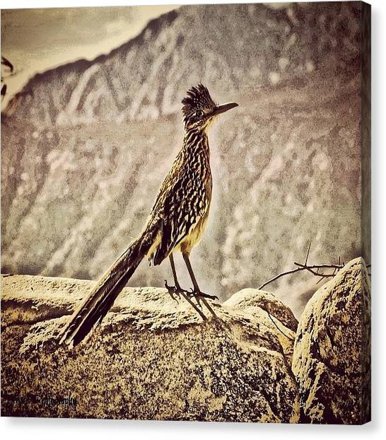 Roadrunner Canvas Print - #tagsforlikes #amazing #all_shots by Skip Jensen