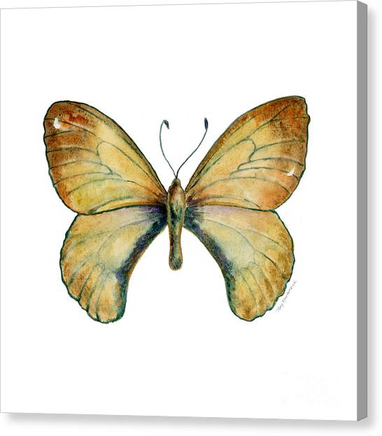 15 Clouded Apollo Butterfly Canvas Print