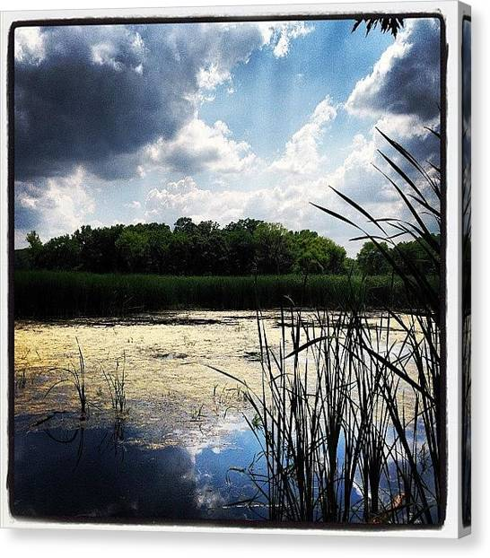 Marshes Canvas Print - Instagram Photo by Dwight Darling