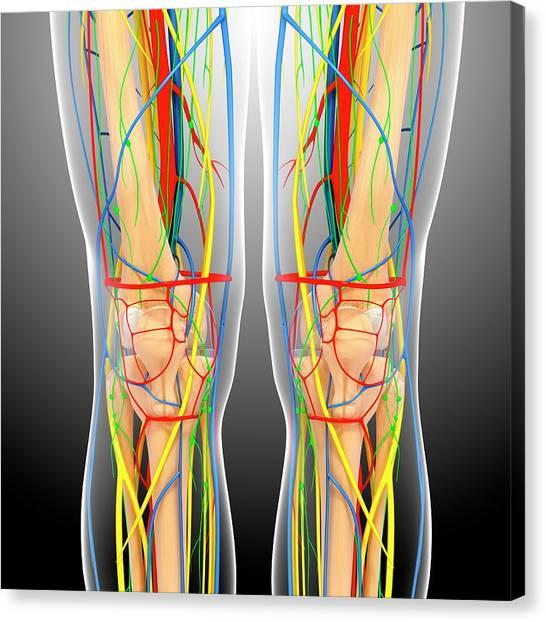 Knee Anatomy Canvas Print by Pixologicstudio/science Photo Library