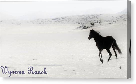 156 Canvas Print by Wynema Ranch
