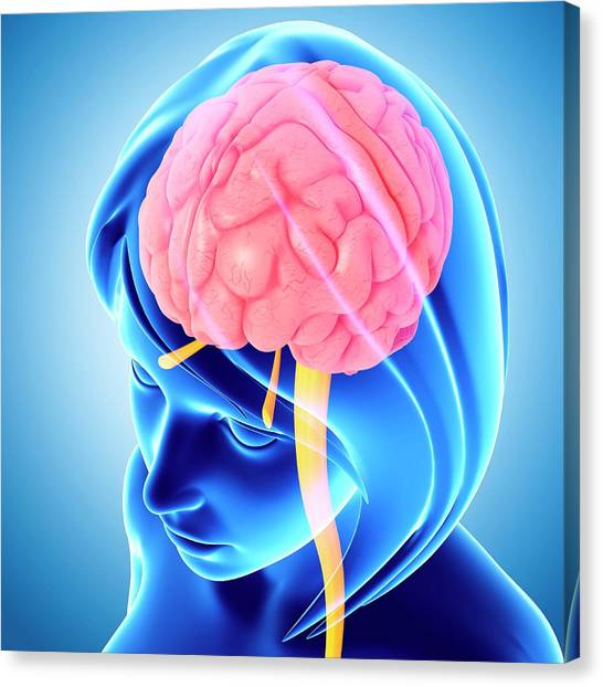 Female Brain Canvas Print by Pixologicstudio/science Photo Library