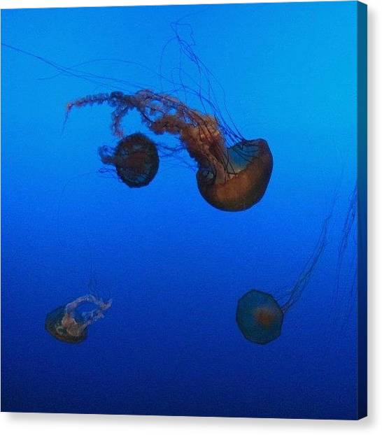 Ocean Life Canvas Print - Jellies by Brittany  Merrill