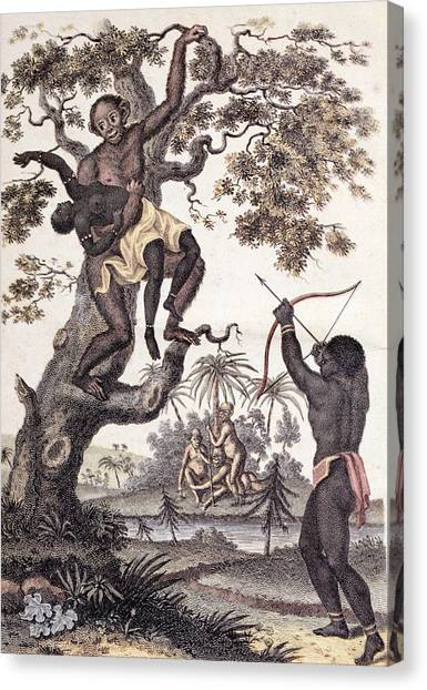 Abduction Canvas Print - 1795 Ape Abducts Woman Sibly Chimp Orang by Paul D Stewart