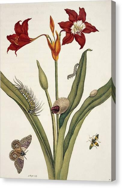 Insects Of Surinam Canvas Print by Natural History Museum, London/science Photo Library