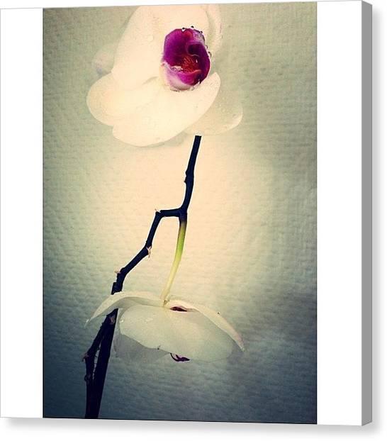 Orchids Canvas Print - Instagram Photo by Bjorn Magnus Worakit Kronen