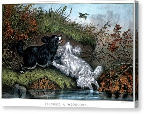 Woodcocks Canvas Print - 1860s Two Spaniel Dogs Flushing by Vintage Images