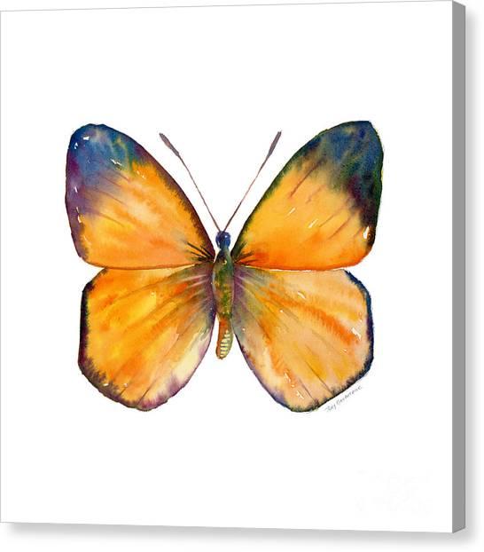 19 Delias Anuna Butterfly Canvas Print