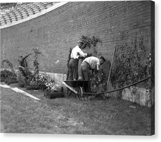 Braces Canvas Print - 1937 Planting Of The Ivy At Wrigley Field by Retro Images Archive