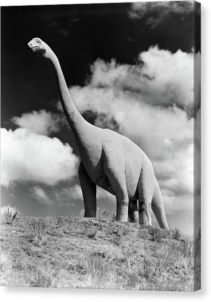 Brontosaurus Canvas Print - 1950s Life-size Statue Of Extinct Long by Vintage Images