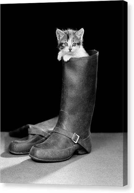 Puss Canvas Print - 1950s Puss In Boots Cute Kitten by Vintage Images