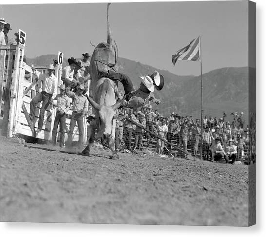 Bull Riding Canvas Print - 1950s Rodeo Bull Rider Male Cowboy by Animal Images