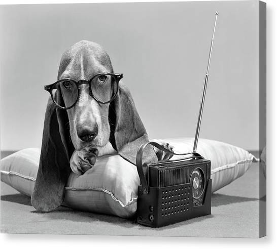 Sight Hound Canvas Print - 1960s Basset Hound Character Wearing by Vintage Images