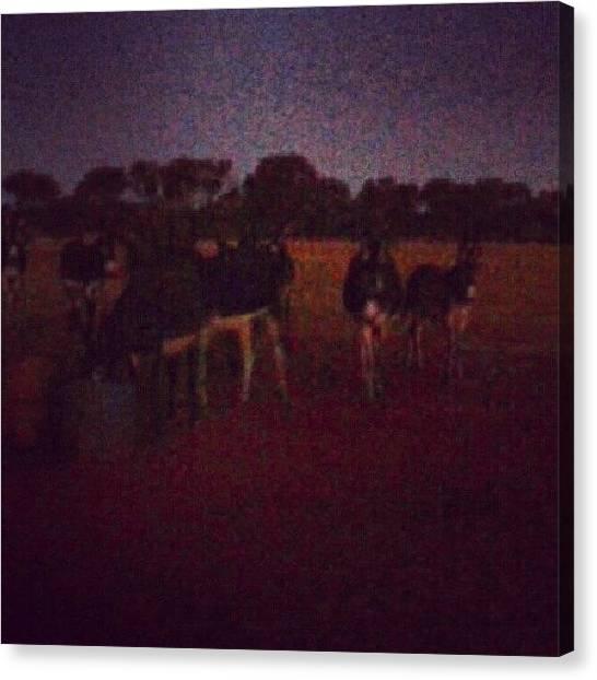 Donkeys Canvas Print - #wednesdays #loveasunburntcountry by Ragenangel -s