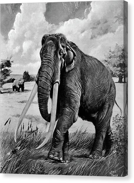 Mammoth Cave Canvas Print - 1980s Illustration Of American Mastodon by Vintage Images