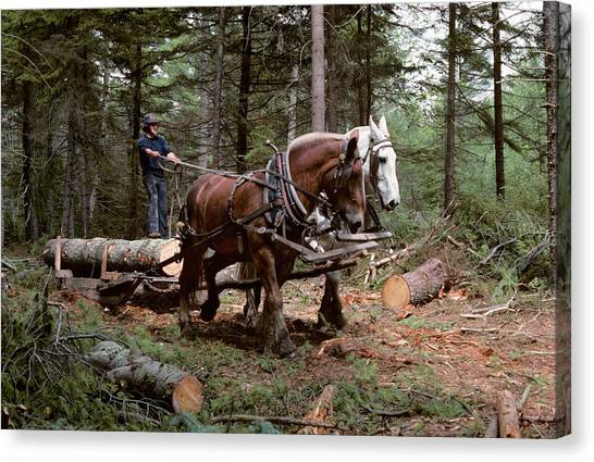 Draft Horses Canvas Print - 1980s Young Man Logging With Team by Vintage Images
