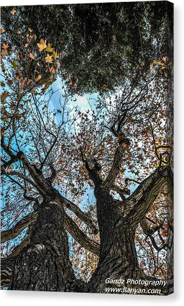 1st Tree Canvas Print