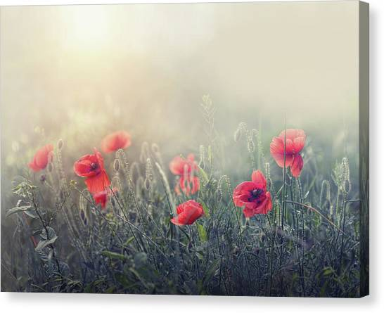 Romantic Flower Canvas Print - .....*...**...*..**... by Dimitar Lazarov -