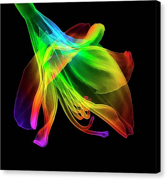 Amaryllis (hippeastrum Sp.) Flower Canvas Print by K H Fung/science Photo Library