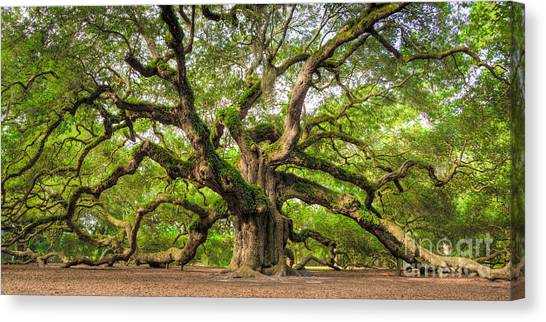 South Carolina Canvas Print - Angel Oak Tree Of Life by Dustin K Ryan