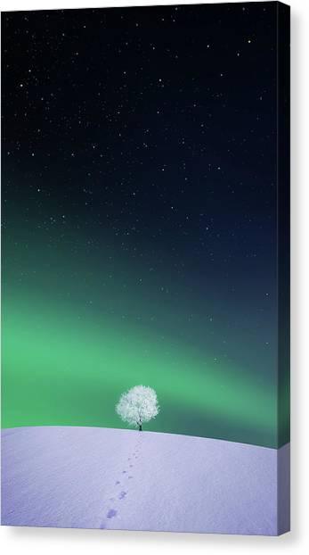 Winter Canvas Print - Apple by Bess Hamiti