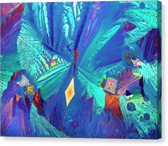 Asparagus Canvas Print - Asparagine Crystals by Steve Lowry