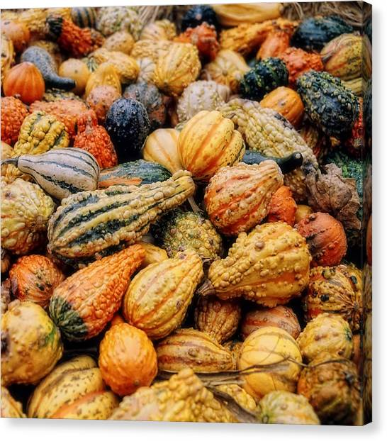 Indian Corn Canvas Print - Autumn Gourds by Joann Vitali