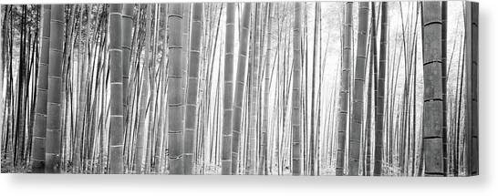 Sagano Bamboo Forest Canvas Print - Bamboo Forest, Sagano, Kyoto, Japan by Panoramic Images