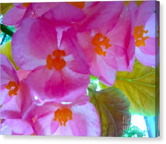 Begonia Debut Canvas Print