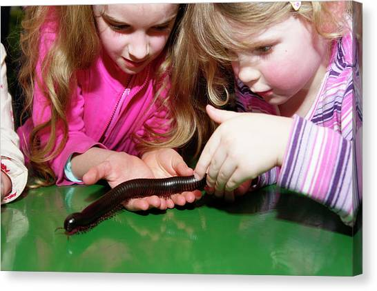 Millipedes Canvas Print - Biology Lesson by Gustoimages/science Photo Library