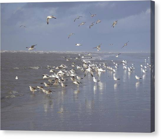 Birds At The Beach Canvas Print