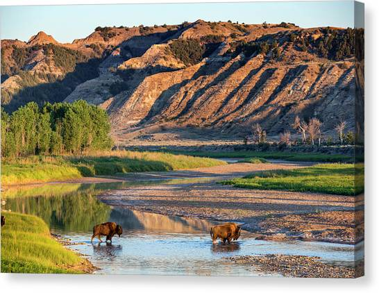 Theodore Roosevelt Canvas Print - Bison Crossing The Little Missouri by Chuck Haney