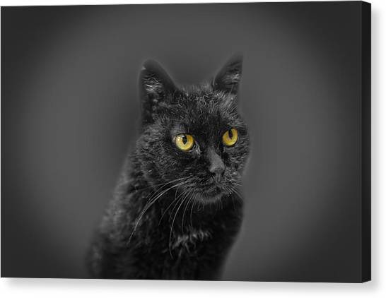 Black Cat Canvas Print