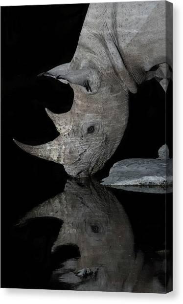 Black Rhinoceros At Night Canvas Print by Tony Camacho/science Photo Library