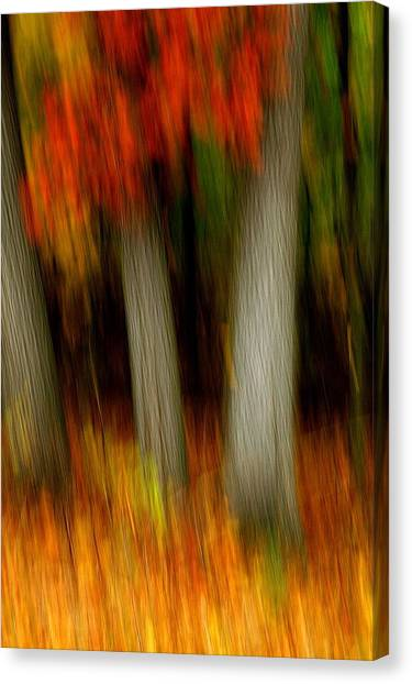 Blazing In The Woods Canvas Print