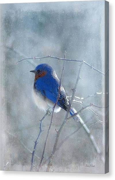 Perching Birds Canvas Print - Blue Bird  by Fran J Scott