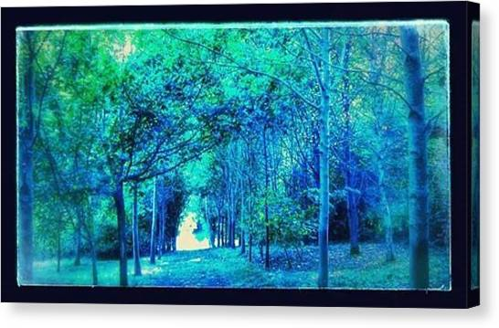 Forest Paths Canvas Print - Blue Forest Path by Candy Floss Happy