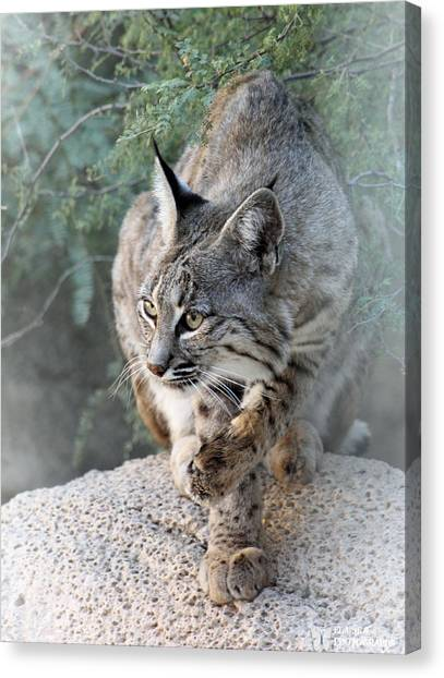 I Was Grooming Canvas Print