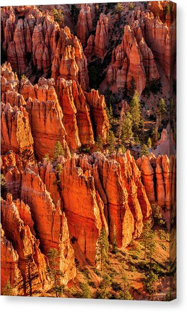 The Amphitheatre Canvas Print - Bryce Canyon National Park Utah, Usa by Michael Defreitas