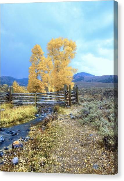 Buffalo Ranch Canvas Print
