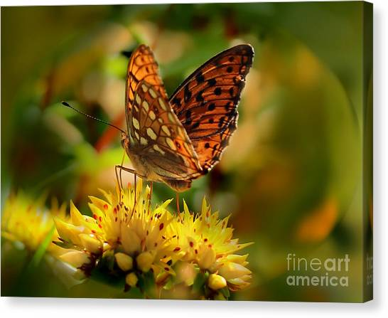 Butterfly Canvas Print by Sylvia  Niklasson