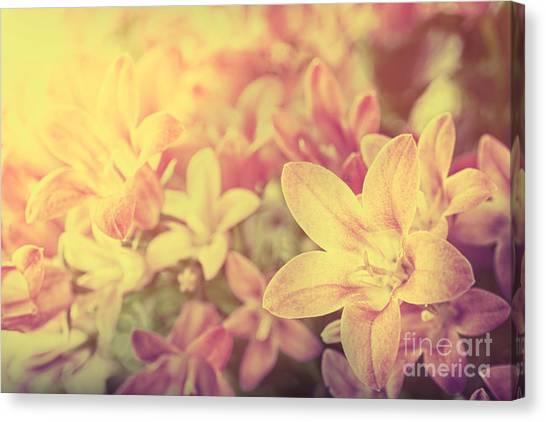Campanula Floral Background Canvas Print by Mythja  Photography