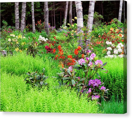 New Brunswick Canvas Print - Canada, New Brunswick, Garden And Forest by Jaynes Gallery