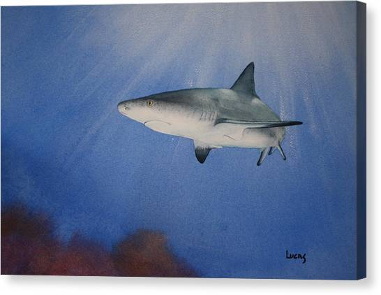 Black Tip Sharks Canvas Print - Caribbean Reef Shark 1 by Jeff Lucas