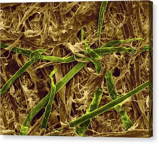 Wood Pulp Canvas Prints | Fine Art America