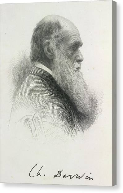 English And Literature Canvas Print - Charles Darwin by British Library