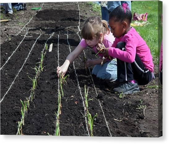 Girl Scouts Canvas Print - Children At Work In A Community Garden by Jim West