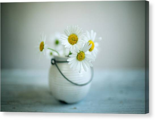 Daisy Canvas Print - Daisy Flowers by Nailia Schwarz