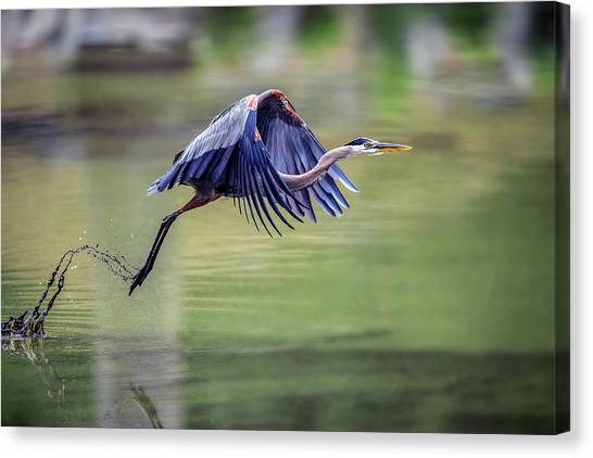 Cranes Canvas Print - 2 by David H Yang