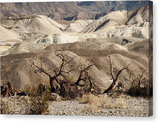 Contour Canvas Print - Death Valley by Juli Scalzi